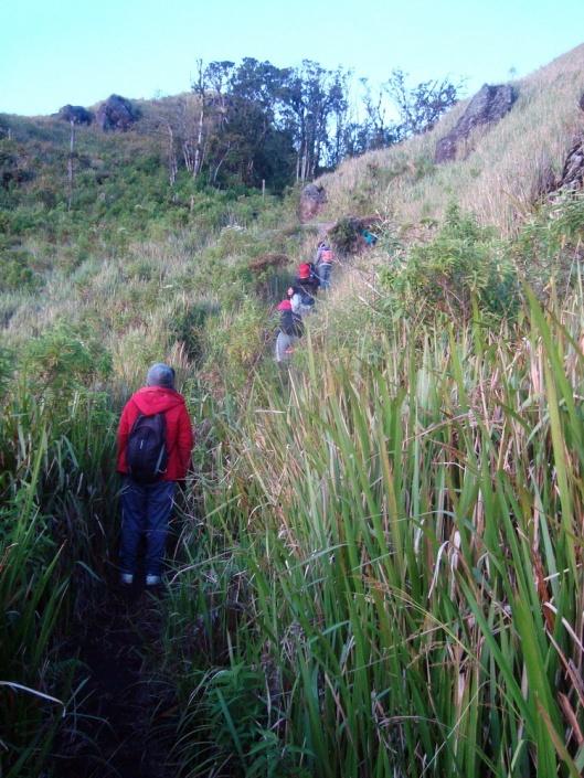 Jalur pendakian menuju puncak Ungaran