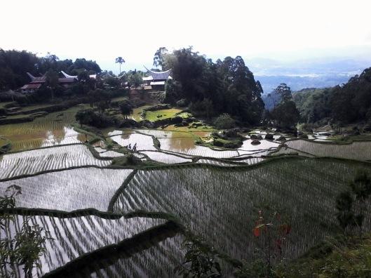 Pemandangan di Batutumonga
